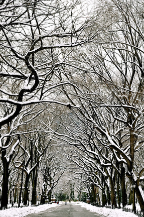 Central Park In Snow By Sivan Askayo Artfully Walls