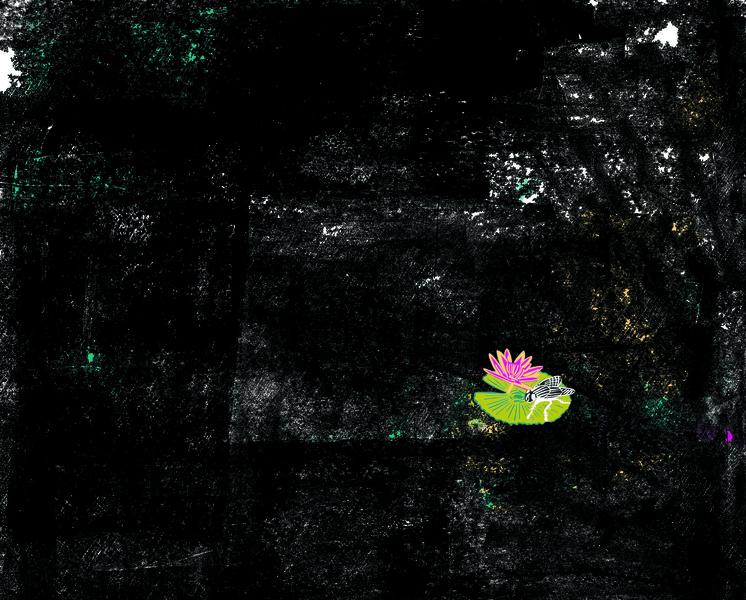 Fly on a Lilypad