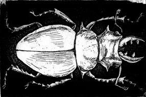 White Beetle on Black