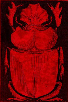 Red Beetle on Black