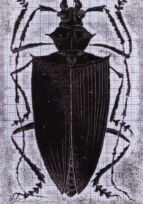 Black Beetle on Grey