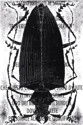 Black Beetle on Words