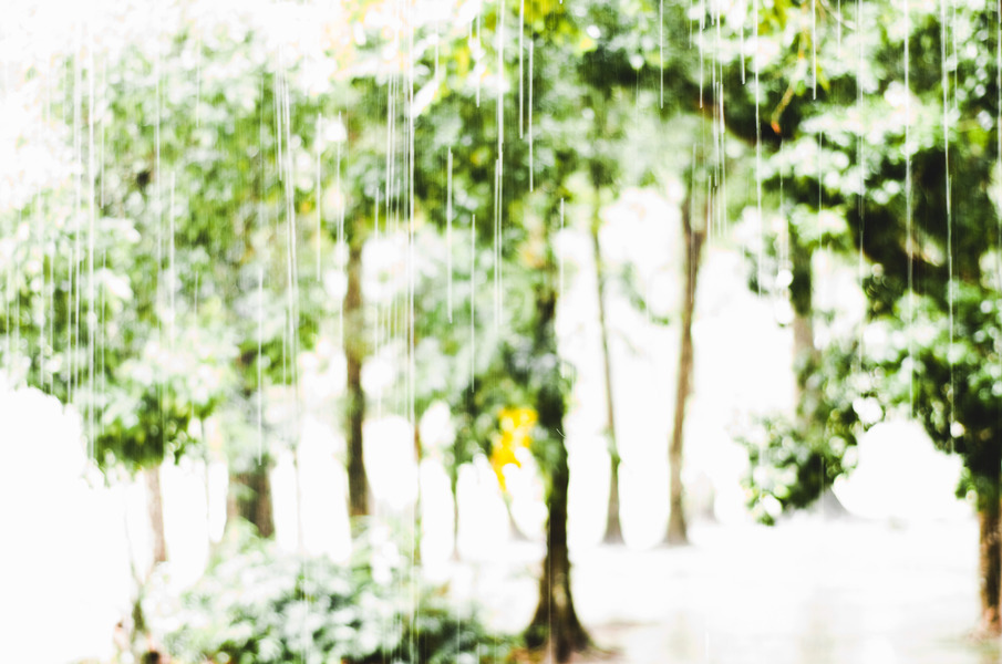 Rain/Forest