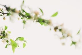 Soft Spring in White