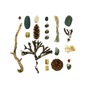 The Shore Path, Bar Harbor, Maine; November 3, 2012 (Beachcombing series No. 68)