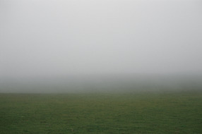 Field #5