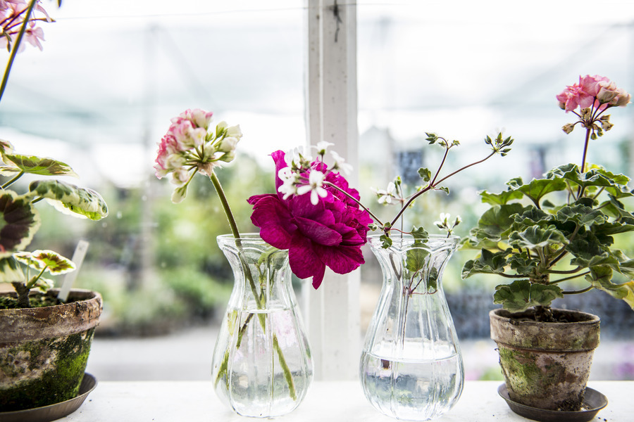 Flowers in Stockholm