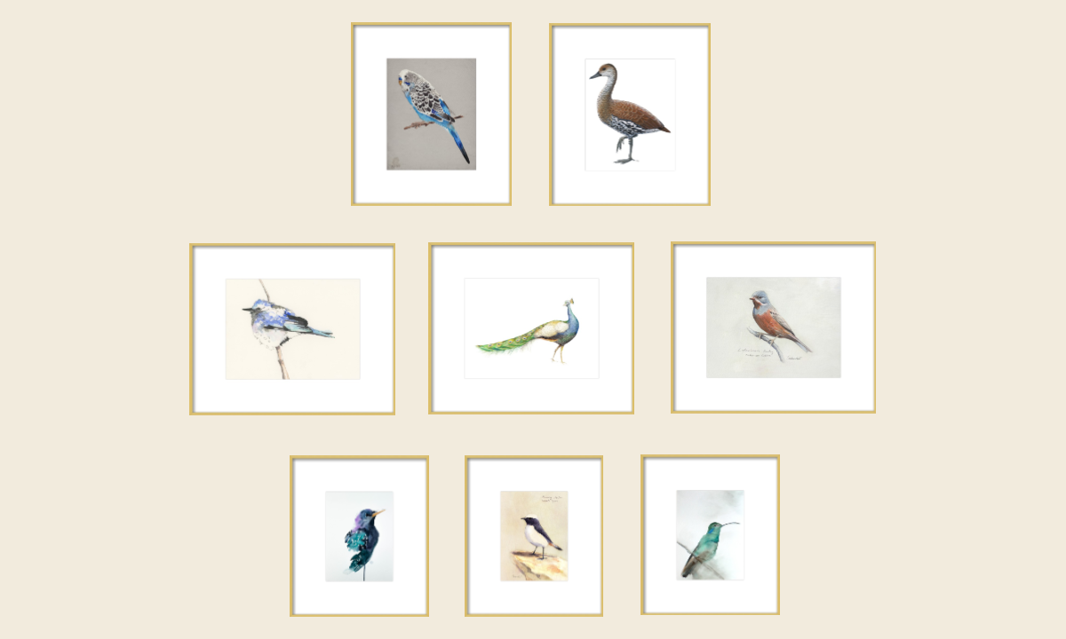 Modern Audubon Works