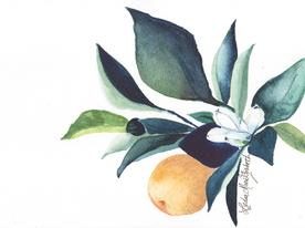 Pear & Magnolia