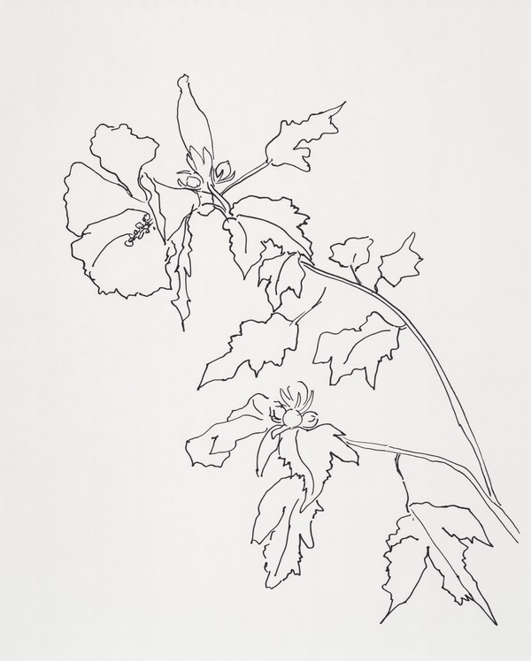 Rose Of Sharon Flower By Casey Chalem Anderson