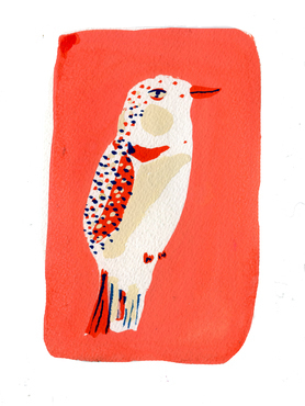 Red and White bird