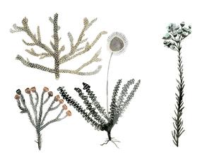Sea Botanicals
