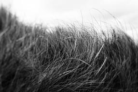 Beach Grass #3