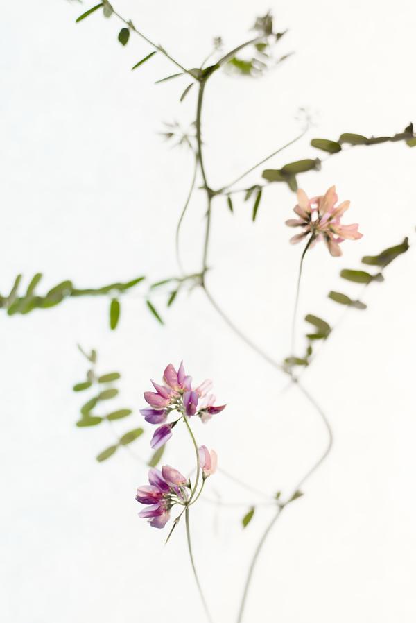 Mauve Tiny Flowers