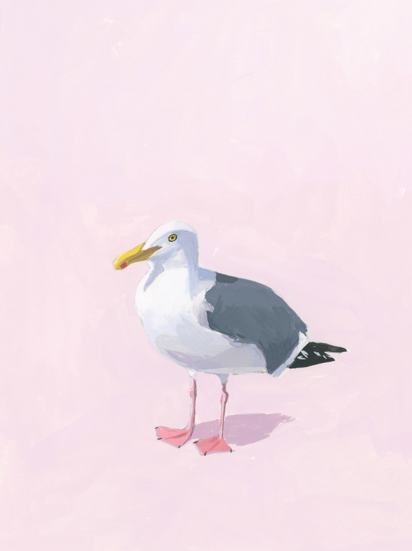 Seagull 16