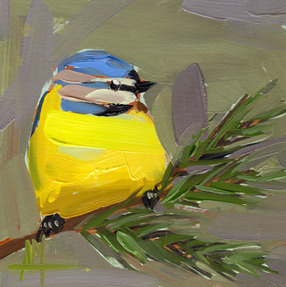 Blue Tit Bird no. 34