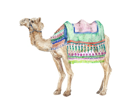 Decorated Indian Camel Watercolor