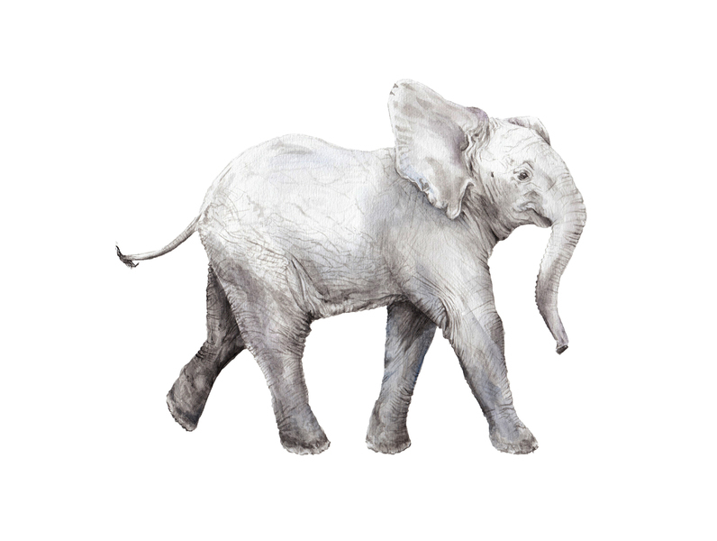 0478946afa7f5c Baby Elephant Watercolor 1 by Lauren Rogoff (This print is sold out ...