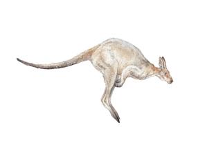 Leaping Kangaroo Watercolor