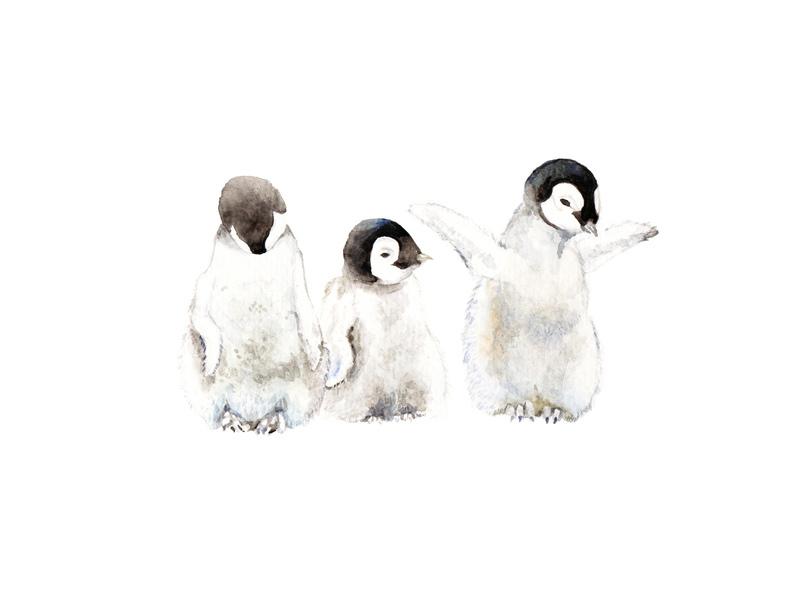 Playful Penguin Chicks