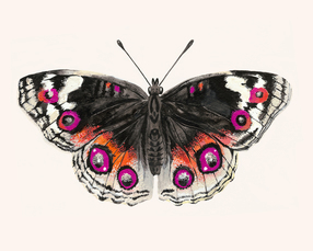 Pink and Orange Butterfly Painting