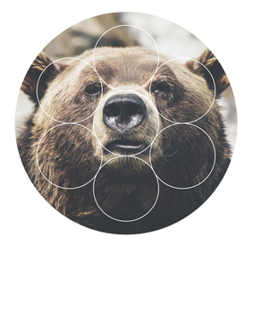 Big Bear Buddy - Geometric Photography