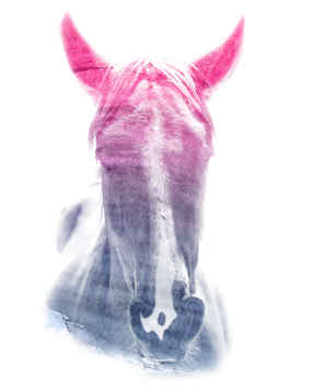 HORSE SUPERIMPOSED WATERCOLOR