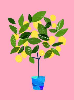 Meyer Lemon Tree / Pink